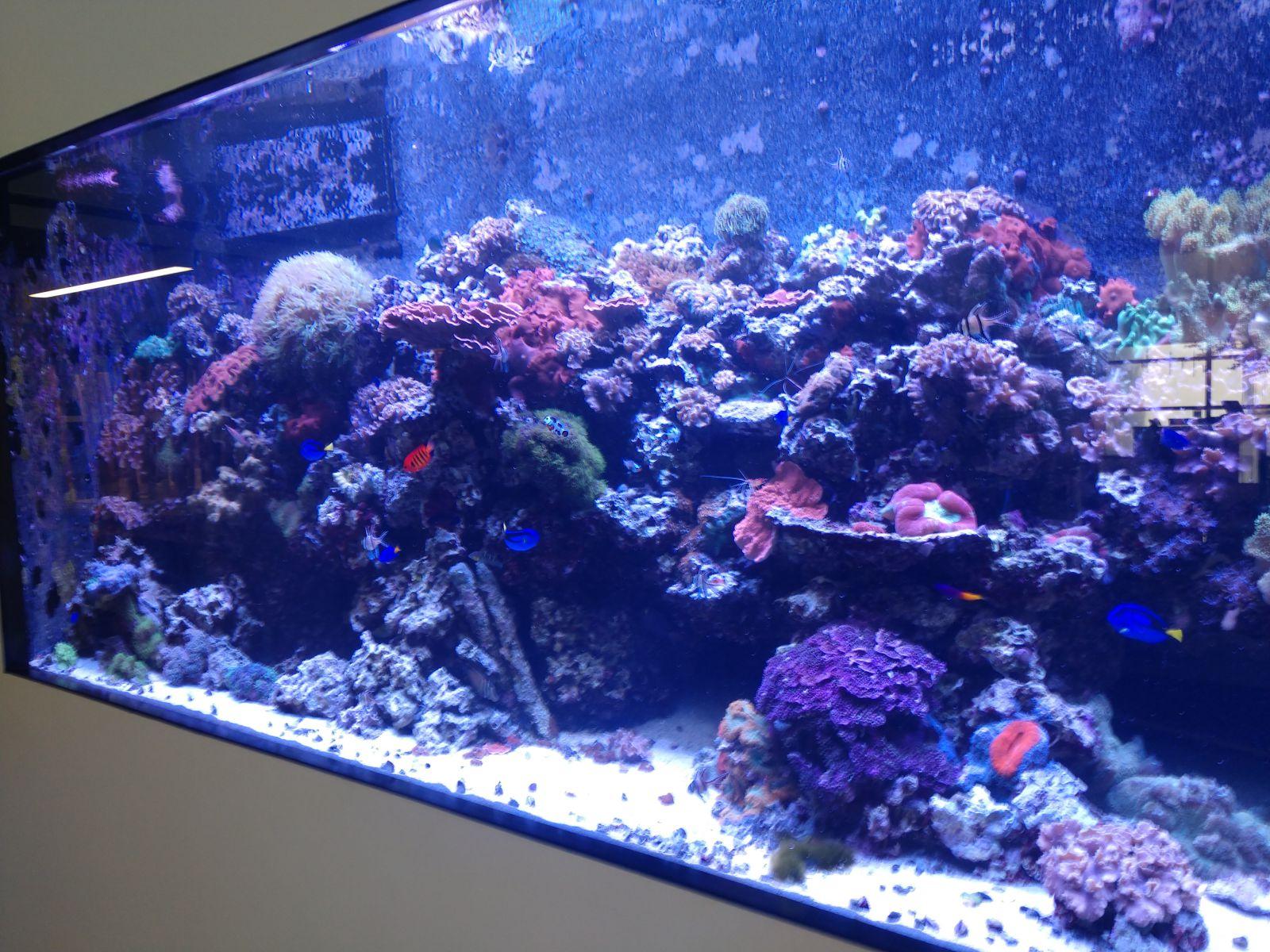 Aquarium Galleries From Fintastic In Charlotte NC