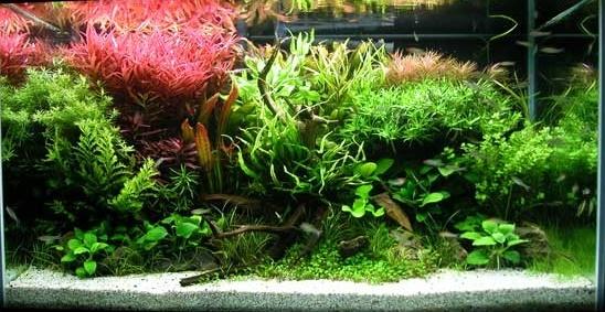 aquariaquarium um