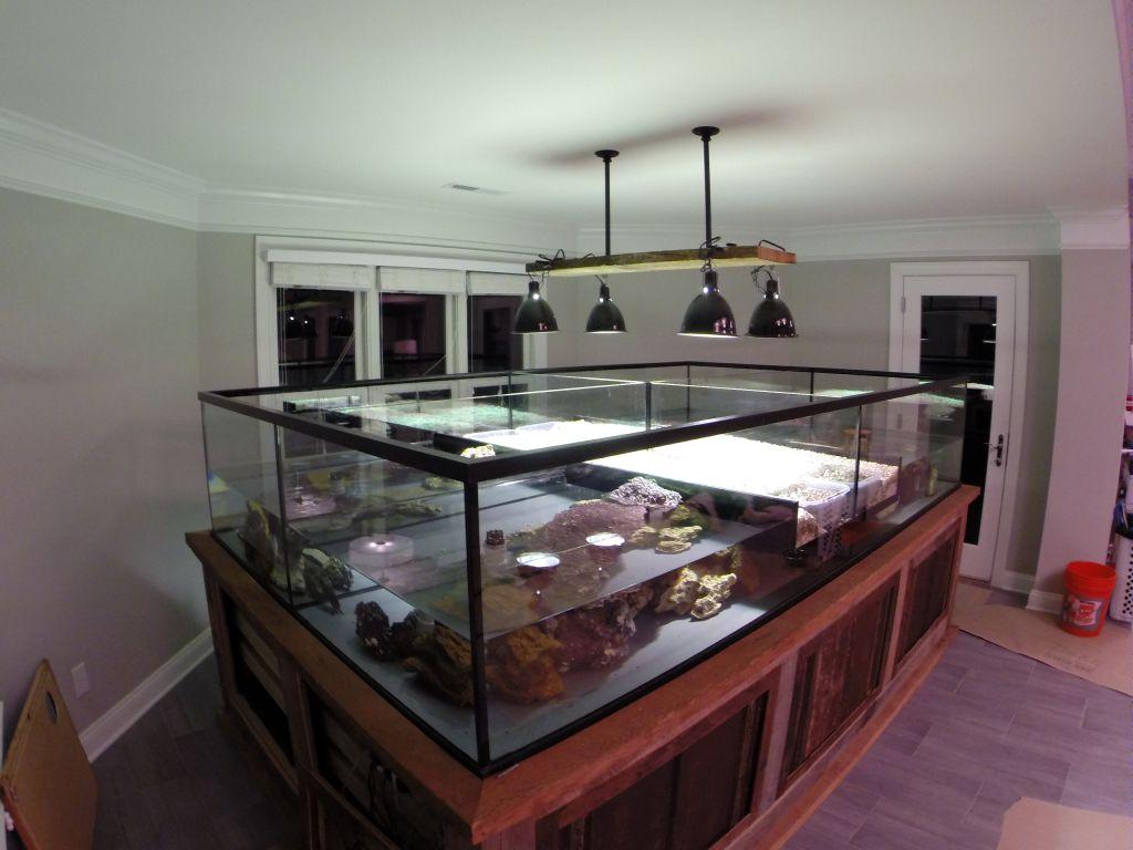 Aquarium Gallery 11.jpg