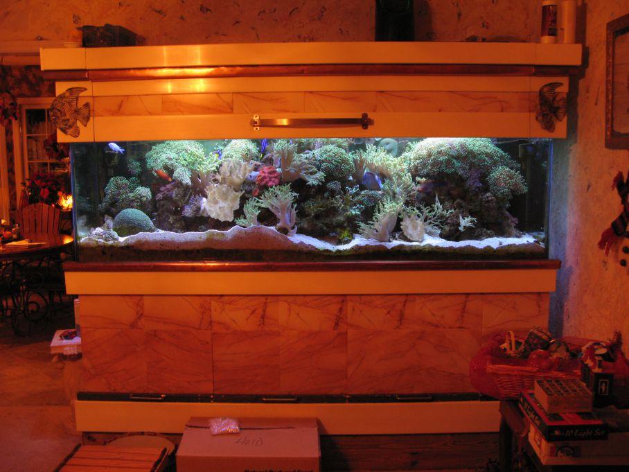 aquarium 31