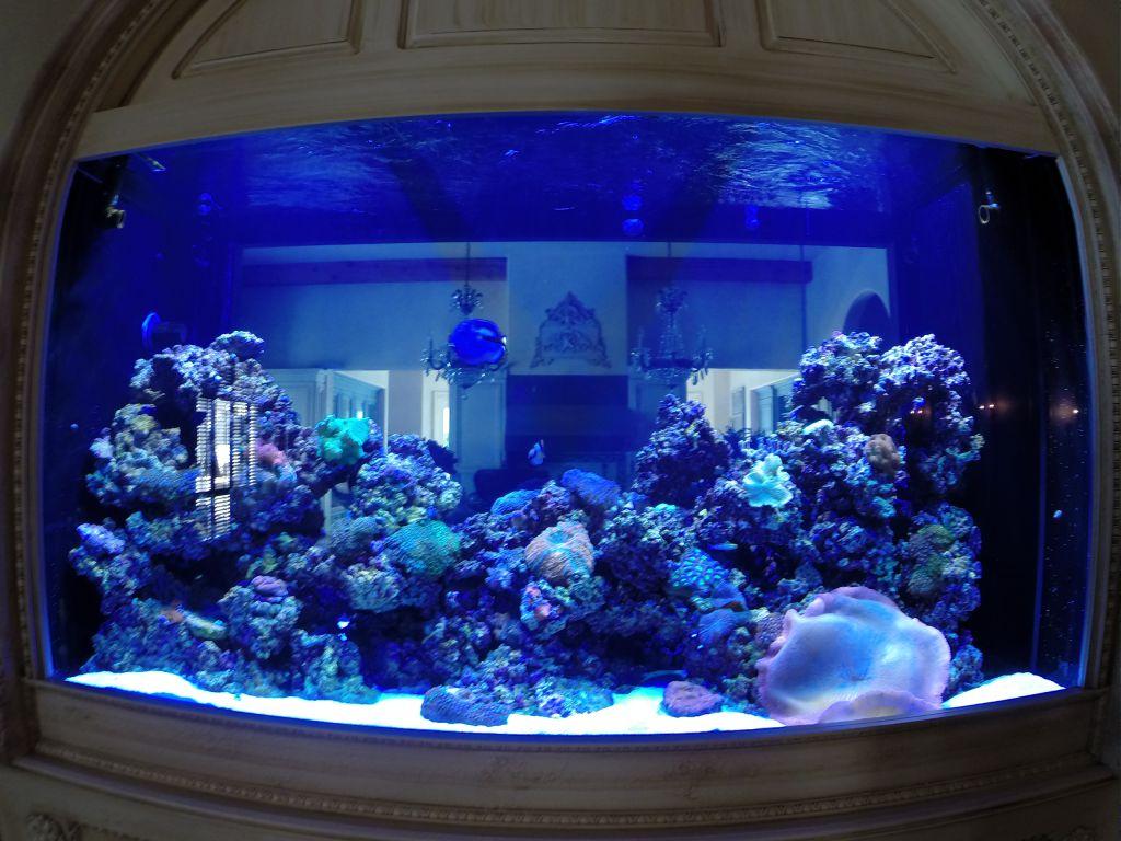 aquarium 35