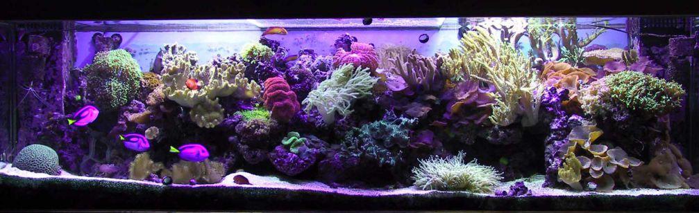 aquarium 40