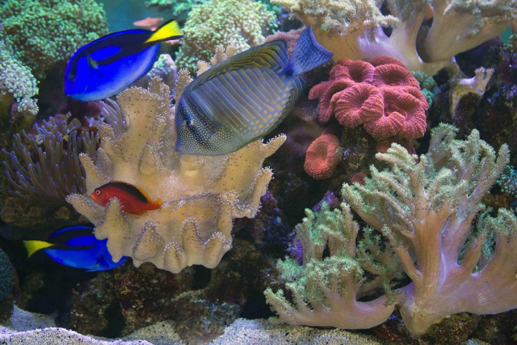 aquarium 46