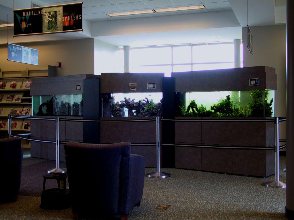 aquarium 50