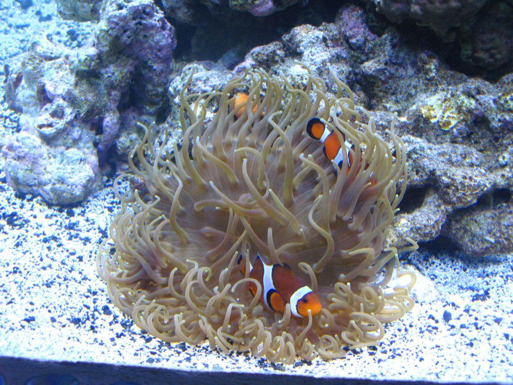 aquarium 52