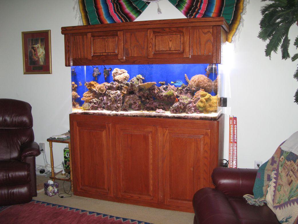 aquarium 53