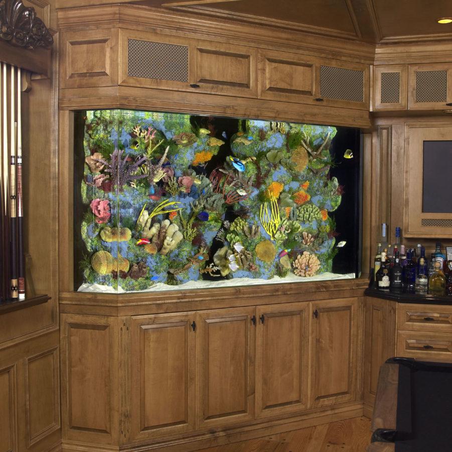 aquarium 54