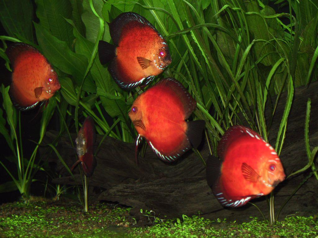 aquarium 58