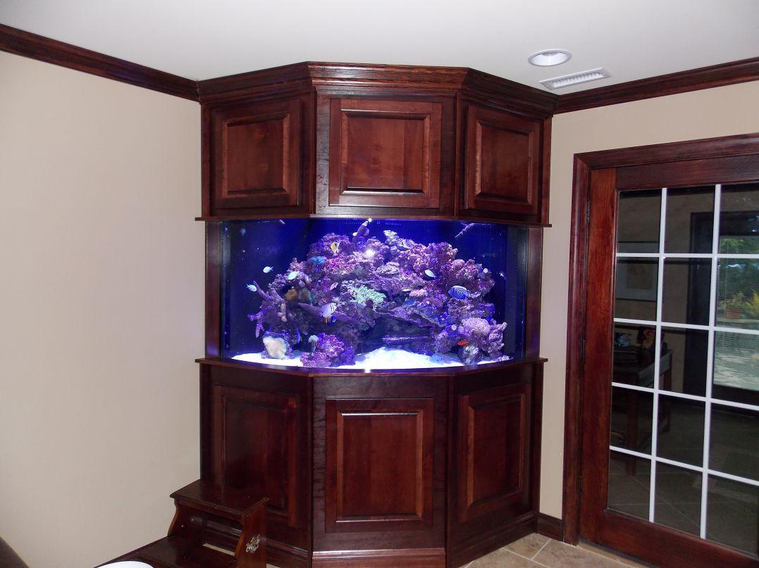 aquarium 65
