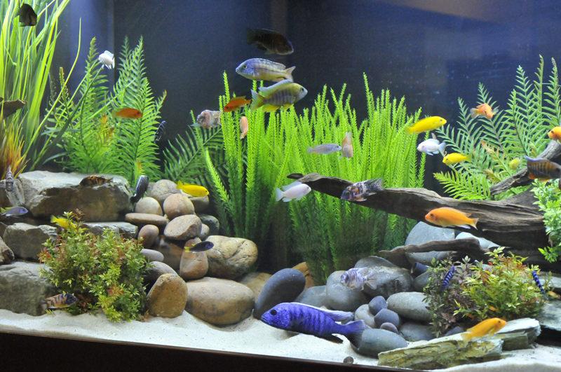 aquarium 66