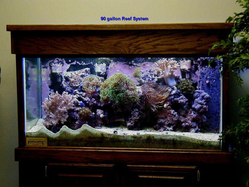 aquarium 67