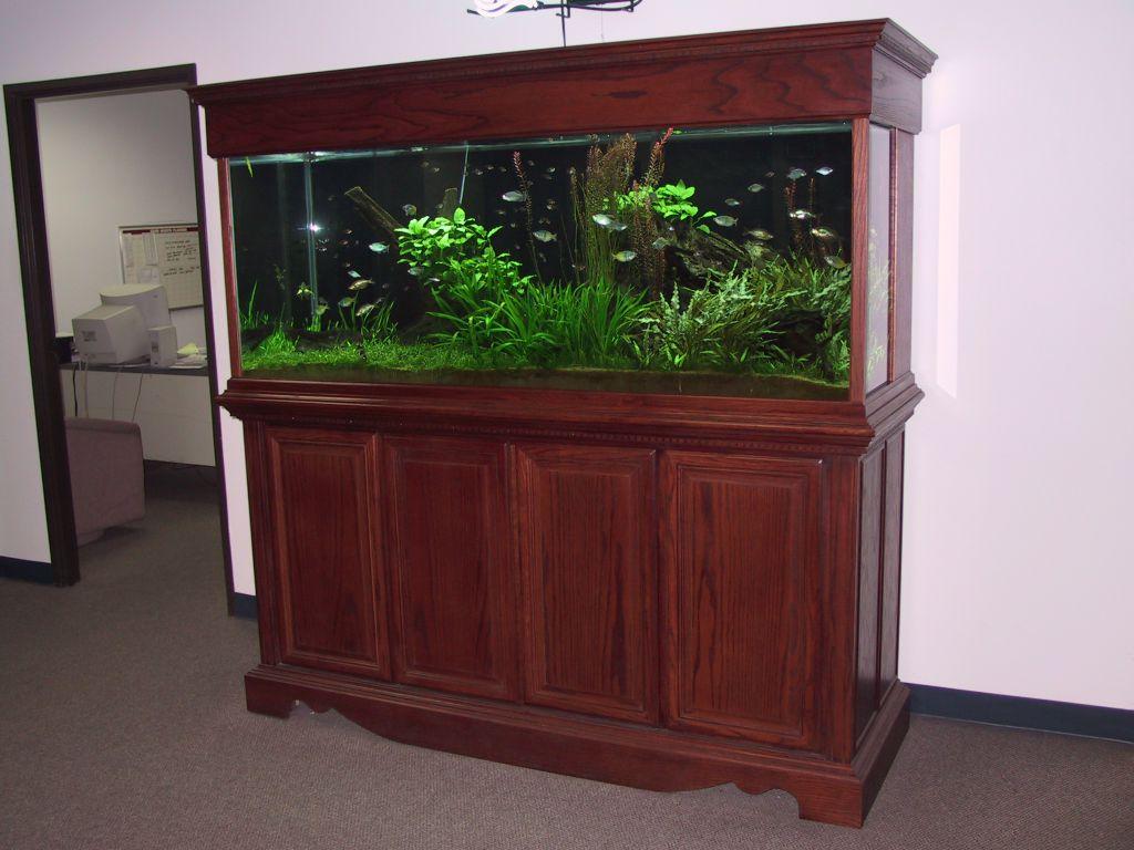 aquarium 82