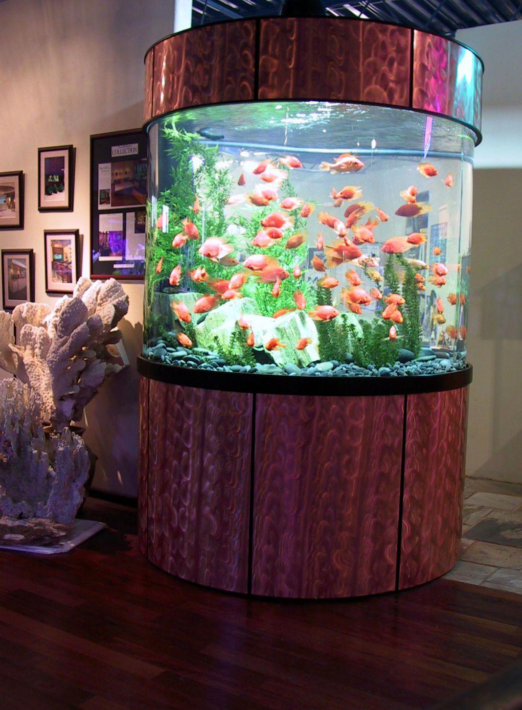 aquarium 83