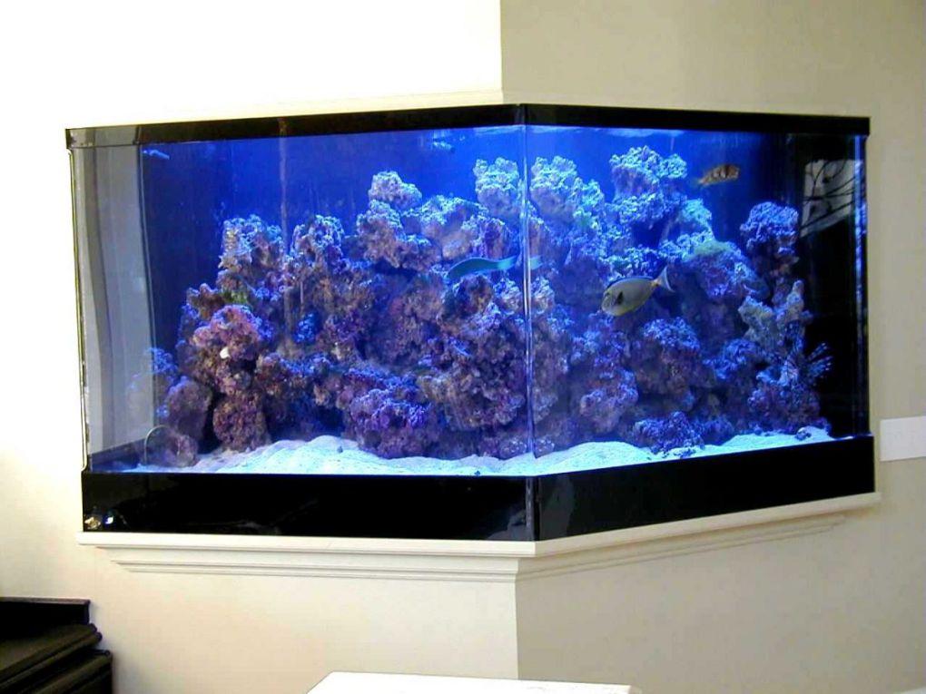 aquarium 85