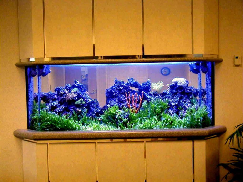 aquarium 86