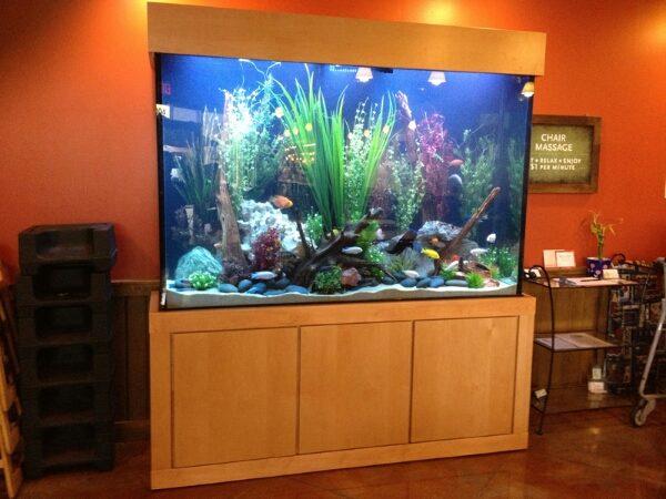 aquarium 88