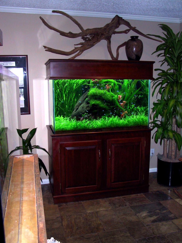 aquarium 91