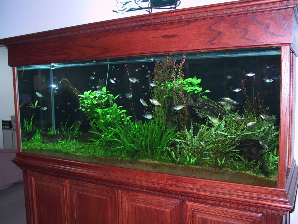 aquarium 94