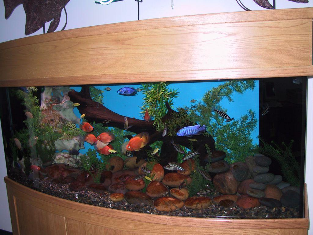 aquarium 95