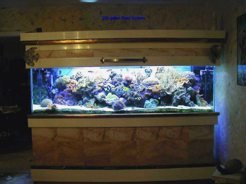 aquarium 97