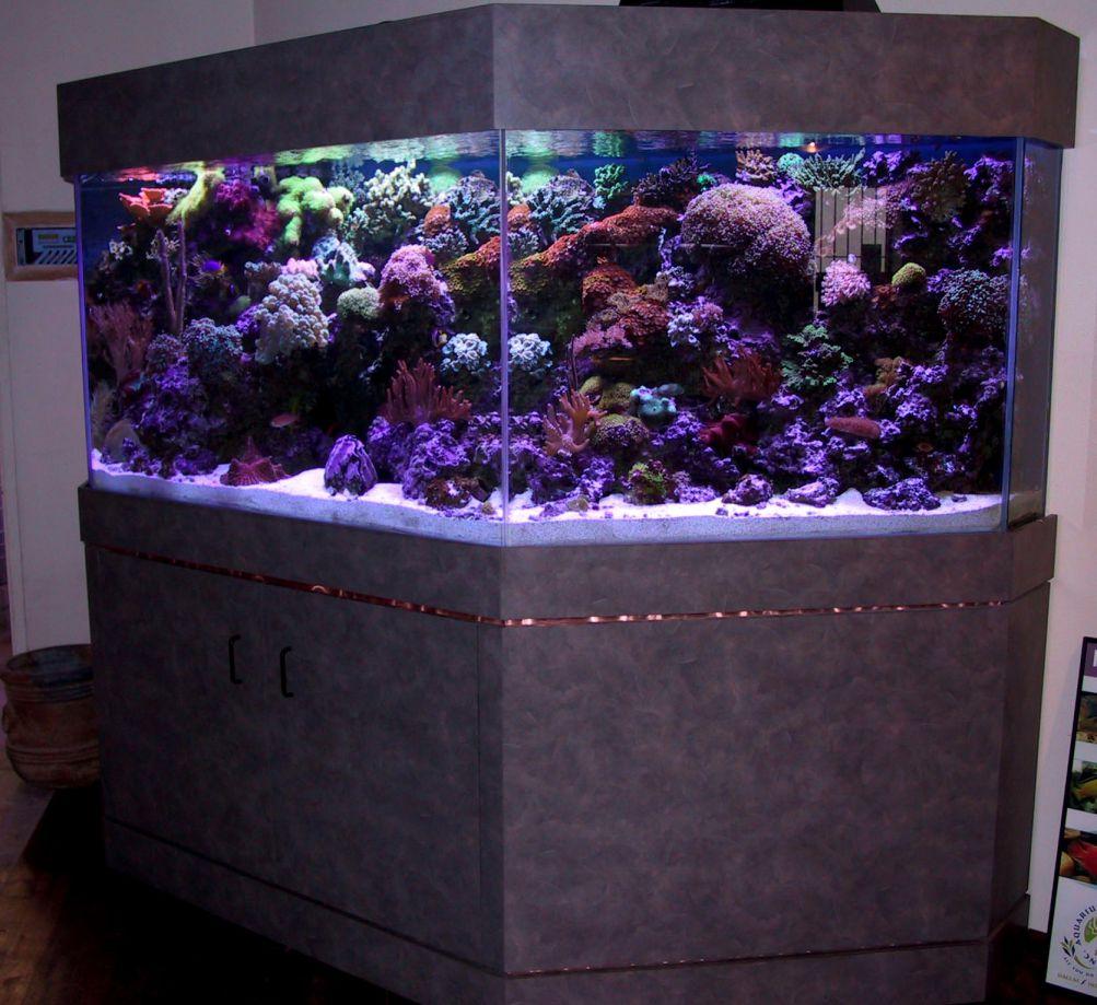 aquarium 98