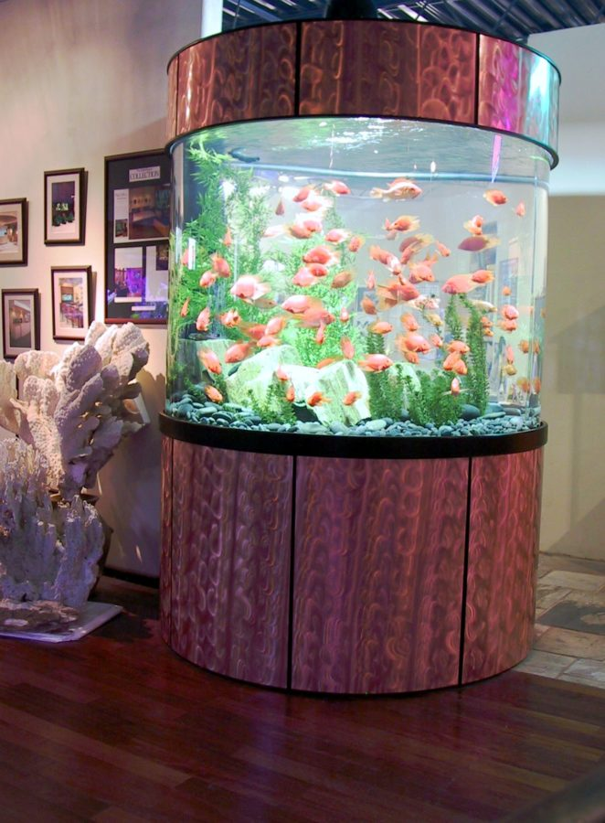 aquarium 99