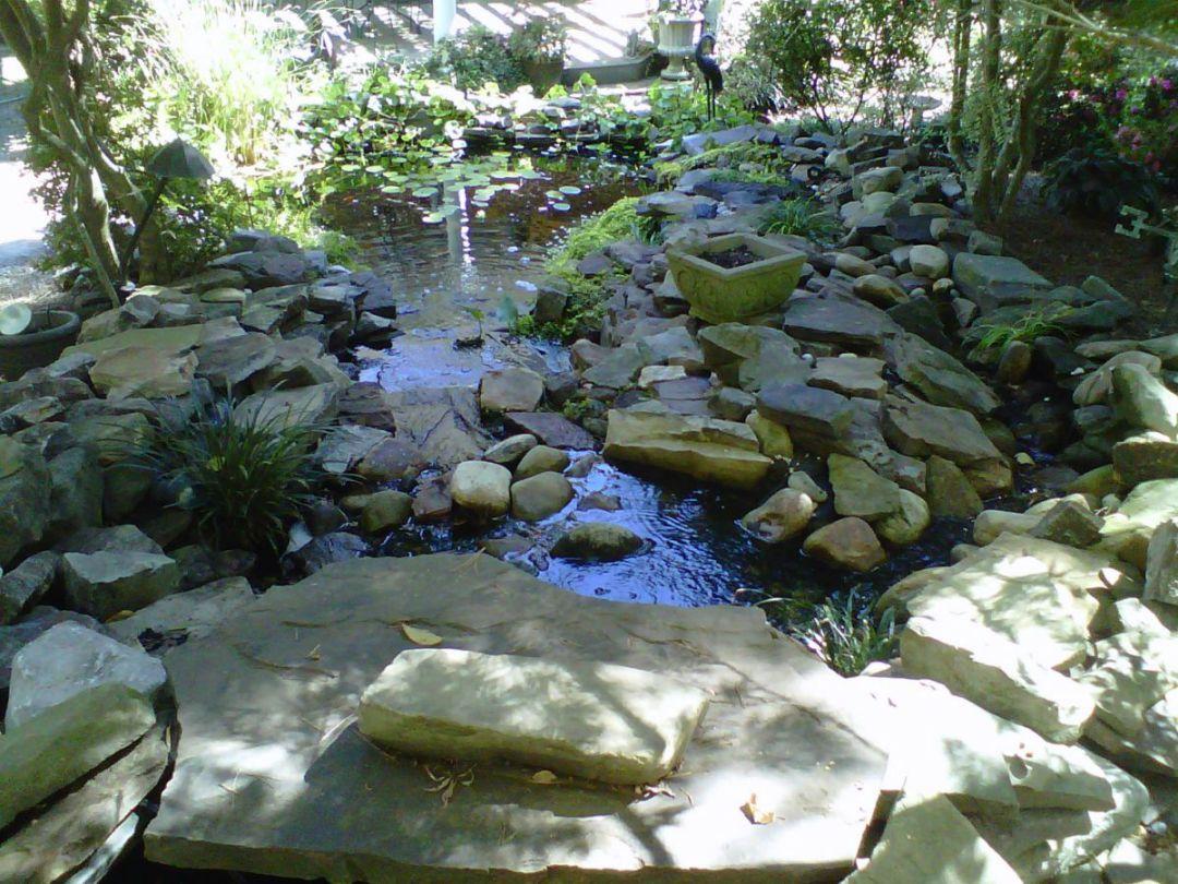 pond_gallery 13