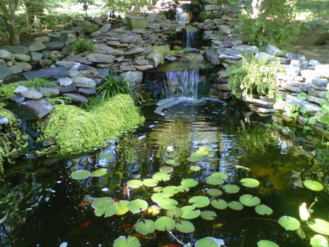 pond_gallery 14