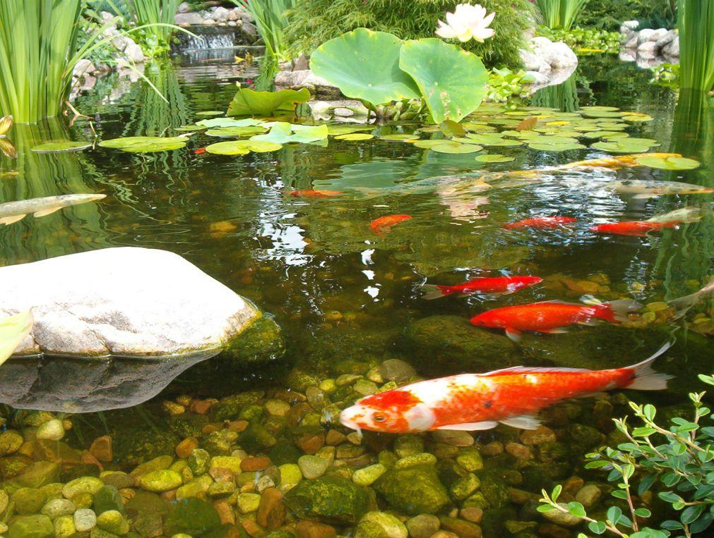 pond_gallery 18