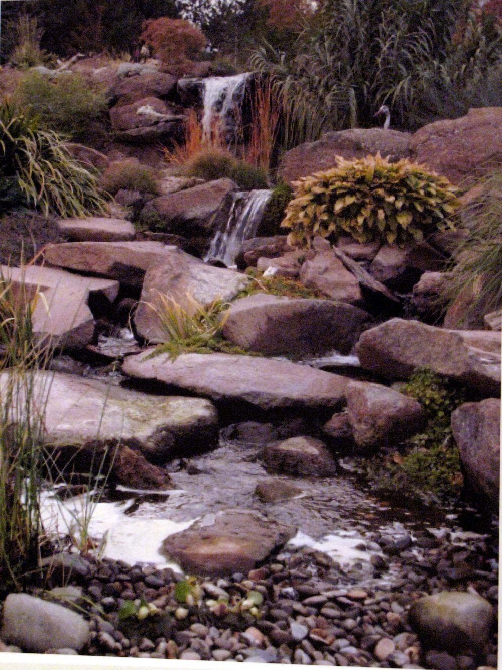 pond_gallery 27
