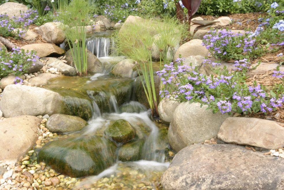 pond_gallery 36