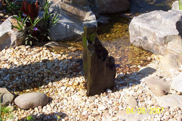 pond_gallery 7