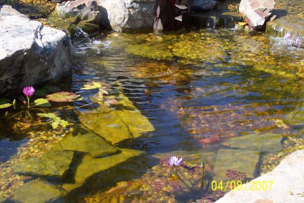 pond_gallery 8