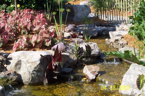 pond_gallery 9