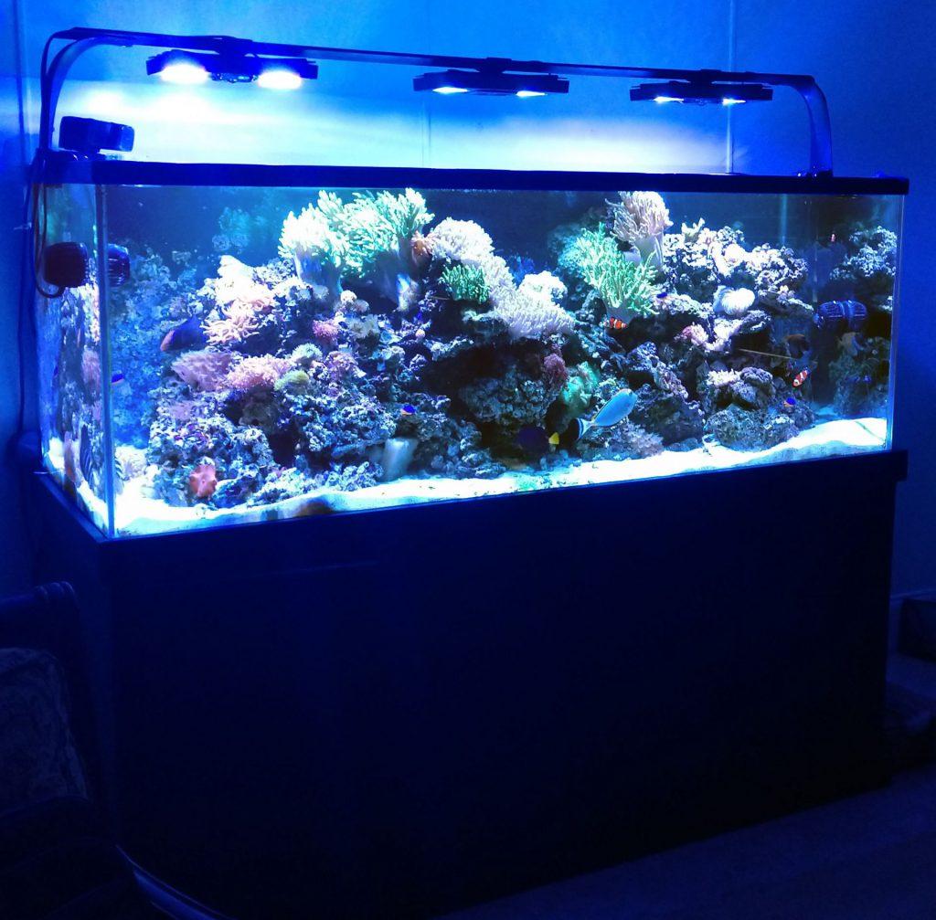 Aquarium Installation Thumbnail